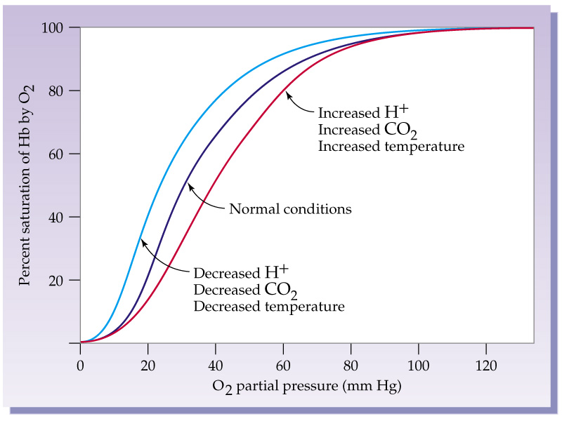 Curva di dissociazione dell'emoglobina