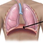 Muscolo Diaframma