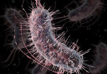 SuperBatteri: come si curano batteri resistenti agli antibiotici?